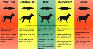 animal weight chart